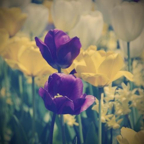 Spring finally!